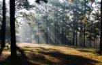 Forestlightwebsize